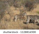 kruger national park  south... | Shutterstock . vector #1128816500