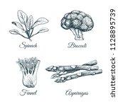 set plants and vegetables.... | Shutterstock .eps vector #1128895739
