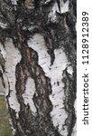 birch bark.the dried tree. | Shutterstock . vector #1128912389