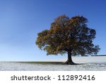 An Oak Tree In The Winter