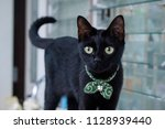 Stock photo black cat yellow eye with green japan collar 1128939440