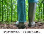 rubber boots for agriculture.... | Shutterstock . vector #1128943358