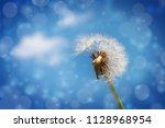 dandelion  taraxacum officinale ... | Shutterstock . vector #1128968954
