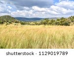 fields with tall grass on the... | Shutterstock . vector #1129019789