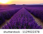 lavender field in bloom  sunset.... | Shutterstock . vector #1129022378