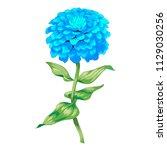 beautiful blue flower zinnia... | Shutterstock .eps vector #1129030256