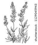 lavender  outline black and... | Shutterstock .eps vector #1129045943