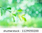 summer seasonal backgrounds for ... | Shutterstock . vector #1129050200
