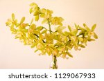 glass vase of yellow cymbidium...   Shutterstock . vector #1129067933