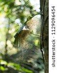 group of babies spider in net... | Shutterstock . vector #1129096454