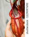 hand holding beautiful pitcher...   Shutterstock . vector #1129097690