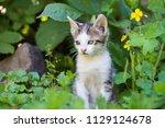 cute kitten in summer | Shutterstock . vector #1129124678