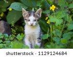 cute kitten in summer | Shutterstock . vector #1129124684