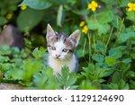 cute kitten in summer | Shutterstock . vector #1129124690