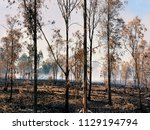 fires in israel that caused...   Shutterstock . vector #1129194794