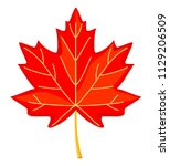 colorful cartoon red maple leaf.... | Shutterstock .eps vector #1129206509
