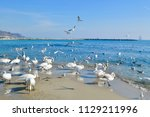 swans and birds hanging out by... | Shutterstock . vector #1129211996