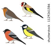 Stock vector vector set of garden bird robin great tit bullfinch goldfinch isolated on white background 1129261586