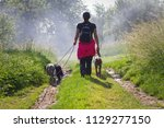 owner on a walk with her dogs.... | Shutterstock . vector #1129277150