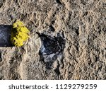close up picture of a geyser... | Shutterstock . vector #1129279259