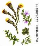 dandelions and spring... | Shutterstock . vector #1129288949