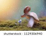 tha snail on the mushroom....   Shutterstock . vector #1129306940