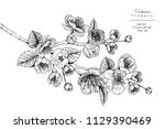 sketch floral botany collection.... | Shutterstock .eps vector #1129390469