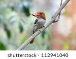 banded kingfisher | Shutterstock . vector #112941040