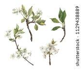 set of watercolor blossom... | Shutterstock . vector #1129438889
