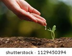 agriculture. growing plants.... | Shutterstock . vector #1129450394