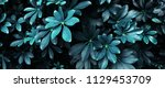 tropical leaf forest glow in... | Shutterstock . vector #1129453709