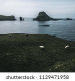 sheep grazing on a green lawn... | Shutterstock . vector #1129471958
