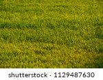 green meadow  evening | Shutterstock . vector #1129487630