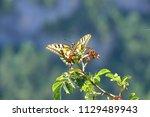 Face Wings Open Butterfly