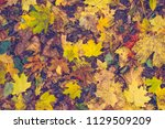 pattern with colorful leaves in ... | Shutterstock . vector #1129509209
