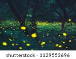 bokeh light of firefly flying... | Shutterstock . vector #1129553696