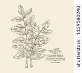 curry tree  branch and curry... | Shutterstock .eps vector #1129580240