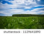 spring meadow and forest... | Shutterstock . vector #1129641890