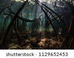 beams of sunlight fall into a... | Shutterstock . vector #1129652453
