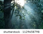 nature tree forest close up... | Shutterstock . vector #1129658798