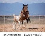 mom and baby paint horses   Shutterstock . vector #1129674680