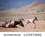 mom and baby paint horses   Shutterstock . vector #1129674686