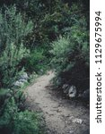 dark green moody bushes on a... | Shutterstock . vector #1129675994