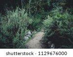 dark green moody bushes on a... | Shutterstock . vector #1129676000