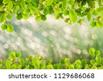 beautiful green leaves frame on ... | Shutterstock . vector #1129686068