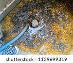 gully  floor or drainage  trap... | Shutterstock . vector #1129699319