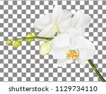orchid branch isolated on... | Shutterstock .eps vector #1129734110