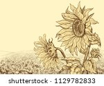 field of sunflowers with large ... | Shutterstock .eps vector #1129782833