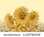 field of sunflowers with large ... | Shutterstock .eps vector #1129784339