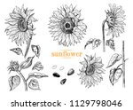 a collection of sunflowers... | Shutterstock .eps vector #1129798046